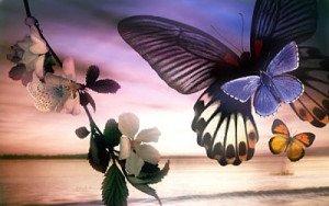 18-free-butterflies_opt